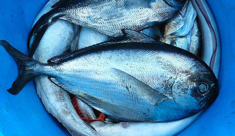 omega 3 nel pesce