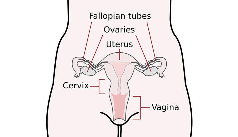 secchezza vaginale