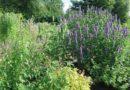 10 erbe naturali per dimagrire e perdere peso